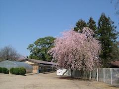 篠村幼稚園