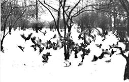 「アーネストサトウ 写真家」の画像検索結果